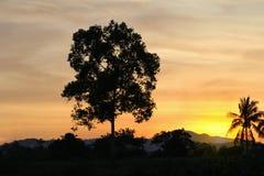 puesta del sol en hermoso colorido del cielo con el árbol de la silueta en arbolado Fotos de archivo libres de regalías