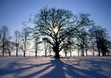 Puesta del sol en invierno Imagen de archivo libre de regalías