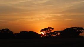 Puesta del sol en Kenia almacen de video