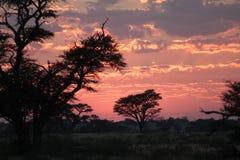 Puesta del sol en Kgalagadi Imagen de archivo libre de regalías