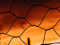 Puesta del sol en la cerca silueteada del pollo Imagen de archivo libre de regalías