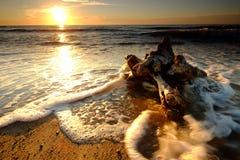 Puesta del sol en la costa báltica polaca, mar espumoso, raíz del árbol, playa, Kolobrzeg, Polonia fotografía de archivo libre de regalías