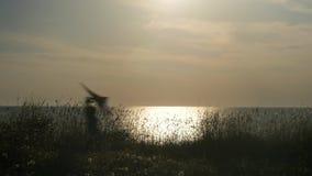 Puesta del sol en la costa niño pequeño que corre la cometa colorida en su concepto de arriba del viaje de las manos almacen de metraje de vídeo