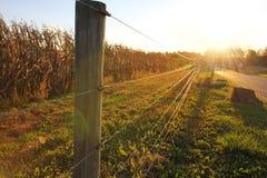 Puesta del sol en la granja, campo de maíz detrás de la cerca fotografía de archivo