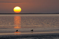 Puesta del sol en la laguna, Walvisbaai, Namibia Fotografía de archivo