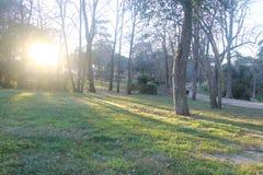 Puesta del sol en la luz de la puesta del sol del parque fotografía de archivo