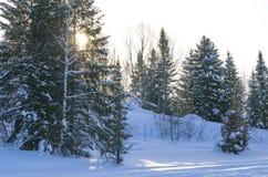 Puesta del sol en la madera en el invierno en Rusia Siberia Imagen de archivo