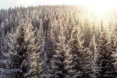 Puesta del sol en la madera entre los árboles Fotografía de archivo libre de regalías