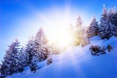 Puesta del sol en la madera entre los árboles Foto de archivo libre de regalías