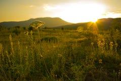 Puesta del sol en la montaña con una flor imagen de archivo libre de regalías
