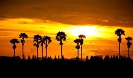 Puesta del sol en la palmera Foto de archivo libre de regalías