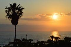 Puesta del sol en la palmera del mar de la isla de Chipre Fotos de archivo