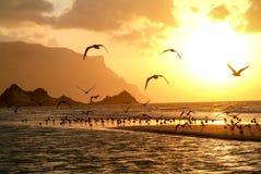 Puesta del sol en la playa de Qalansiya, Yemen fotografía de archivo libre de regalías