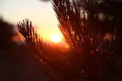Puesta del sol en la playa, pinos, mar Imágenes de archivo libres de regalías