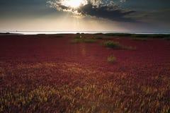 Puesta del sol en la playa roja de PanJin, China Imagen de archivo libre de regalías