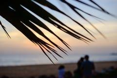 Puesta del sol en la playa a través de las hojas de la palmera imagen de archivo libre de regalías