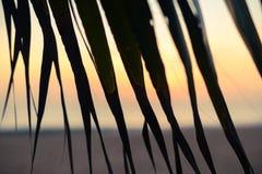 Puesta del sol en la playa a través de las hojas de la palmera imágenes de archivo libres de regalías