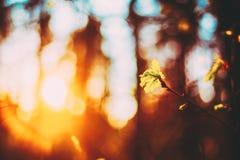 Puesta del sol en la primavera Forest Young Leaf In Sunlight fotos de archivo libres de regalías