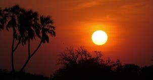 Puesta del sol en la sabana, Masai Mara Park en Kenia, almacen de metraje de vídeo
