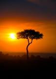 Puesta del sol en la sabana, retrato Imagen de archivo libre de regalías