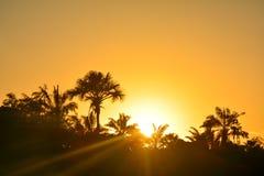 Puesta del sol en la selva Foto de archivo