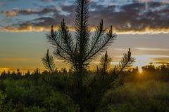 Puesta del sol en la tundra de Lovozero Foto de archivo libre de regalías