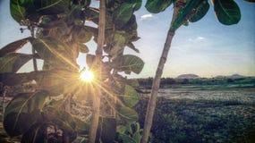 Puesta del sol en las hojas Imagen de archivo libre de regalías