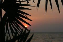 Puesta del sol en las hojas Tailandia fotos de archivo libres de regalías