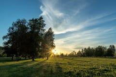 Puesta del sol en las maderas Fotos de archivo libres de regalías