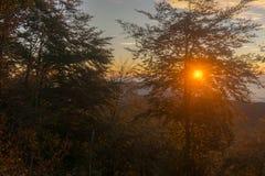 Puesta del sol en las maderas fotos de archivo