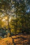 Puesta del sol en las maderas imagenes de archivo