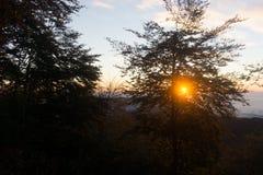 Puesta del sol en las maderas foto de archivo
