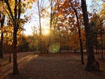Puesta del sol en las maderas Imágenes de archivo libres de regalías