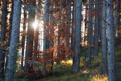 Puesta del sol en las maderas Fotografía de archivo libre de regalías