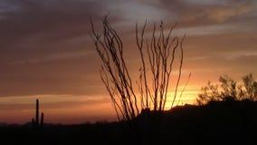 Puesta del sol en las montañas de la superstición, Arizona del árbol del Ocotillo almacen de video