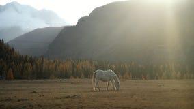 Puesta del sol en las montañas y un caballo blanco en un campo ancho metrajes