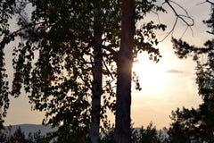 Puesta del sol en las ramas del abedul Imagen de archivo libre de regalías