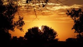 Puesta del sol en los arbustos Fotografía de archivo libre de regalías