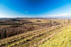 Puesta del sol en los viñedos de Collio, Italia Foto de archivo libre de regalías