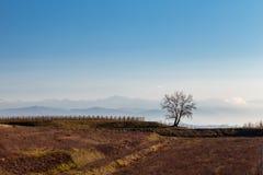 Puesta del sol en los viñedos de Collio, Italia Imagenes de archivo