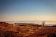 Puesta del sol en los viñedos de Collio, Italia Fotografía de archivo libre de regalías
