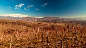 Puesta del sol en los viñedos de Collio, Italia Foto de archivo