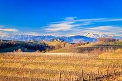 Puesta del sol en los viñedos de Rosazzo Foto de archivo