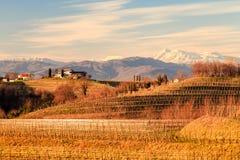 Puesta del sol en los viñedos de Rosazzo Fotografía de archivo libre de regalías