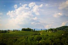 Puesta del sol en los viñedos de Rosazzo Fotografía de archivo