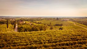 Puesta del sol en los viñedos de Rosazzo Foto de archivo libre de regalías