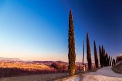 Puesta del sol en los viñedos de Rosazzo Imagen de archivo