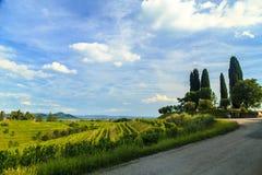 Puesta del sol en los viñedos de Rosazzo Imágenes de archivo libres de regalías