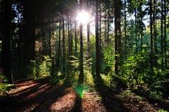 Puesta del sol en maderas. fotografía de archivo