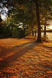 Puesta del sol en maderas en la orilla del lago imagen de archivo libre de regalías